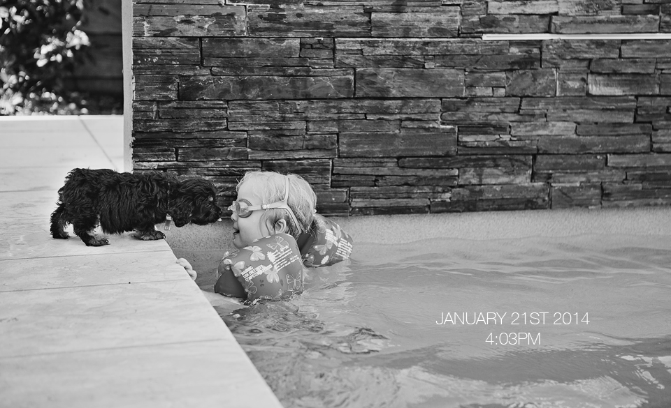 Puppy and girl in pool, brisbane  photographer