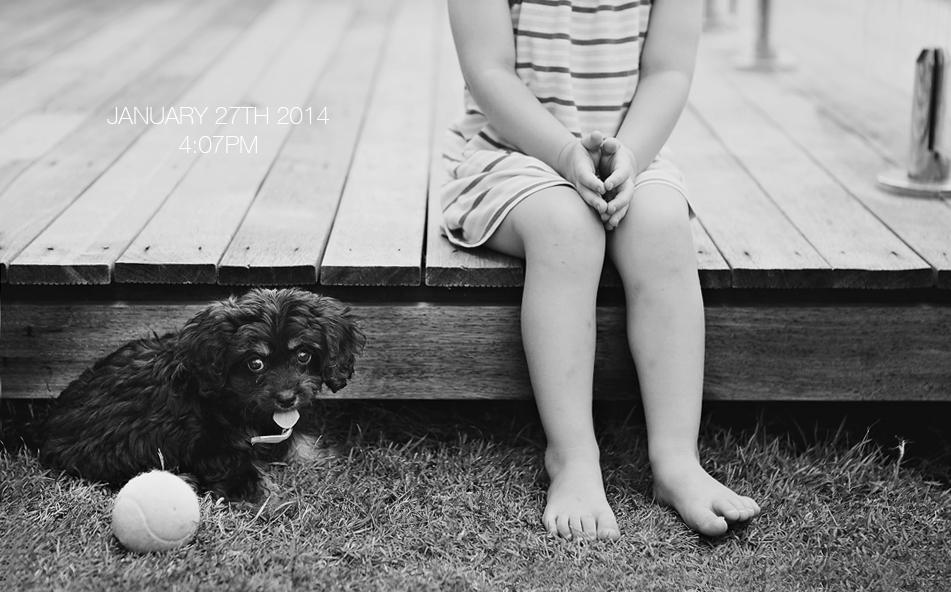 brisbane photographer, puppies